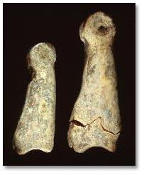 این تصویر نشان دهندۀ استخوانهای سم بز (Capra Hircus) است که در سکونتگاه ده هزارسالۀ گنجدره در کرمانشاه پیدا شده است.
